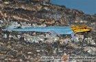 Lygodactylus luteopicturatus - gekon żółtogłowy